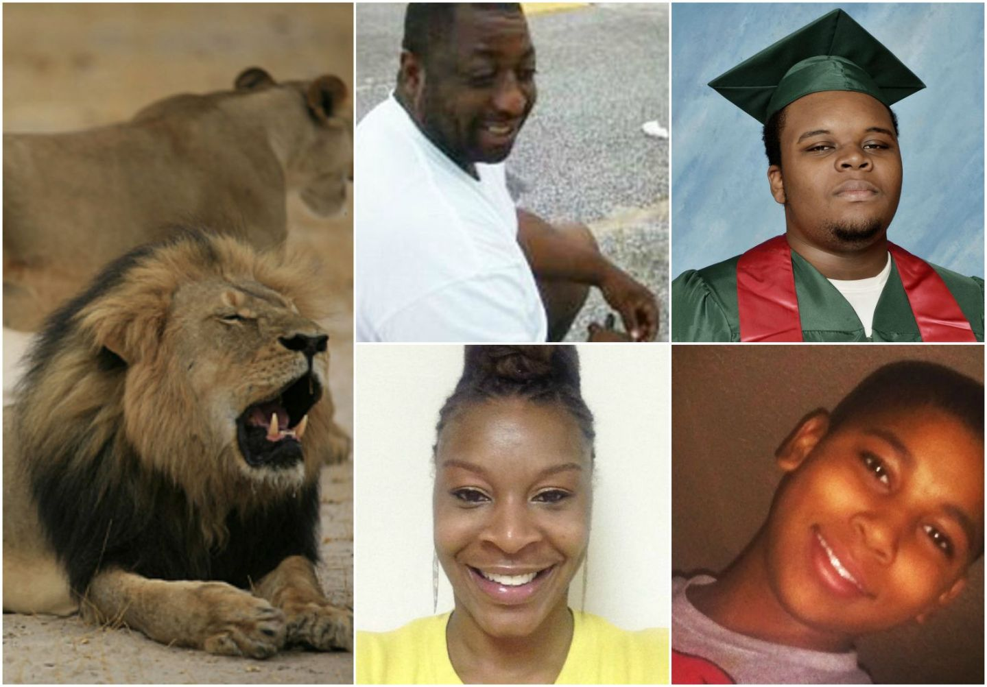 Why Does Cecil The Lion Receive More Humanity Than Slain Black Lives?